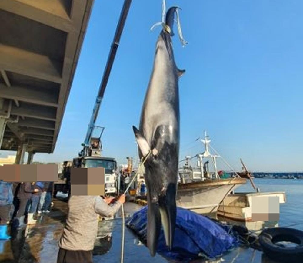 This file photo released by the Pohang Coast Guard on Oct. 19, 2020, shows a whale that was caught by accident by a fishing boat in Pohang, 374 kilometers south of Seoul. (Pohang Coast Guard)