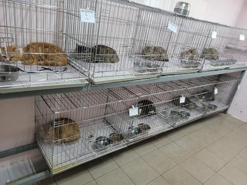 This photo, provided by the Jin Ward Office in Busan, shows some of the 14 cats that were rescued from an apartment after their owner falsely reported they were abandoned by a tenant. (Jin Ward Office)