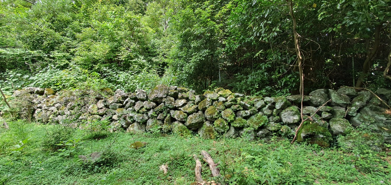 Jatdam Stone Walls in Gotjawal regions used to demarcate grazing land for livestock farming. (Kim Hae-yeon/The Korea Herald)