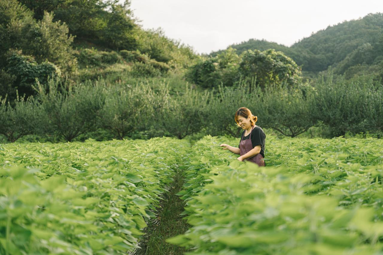 In 2010, Jirisan Cheorum Farming Association Corporation CEO Chung Jung-eum started a perilla and sesame farm in Namwon, North Jeolla Province. (Photo credit: Jirisan Cheorum)