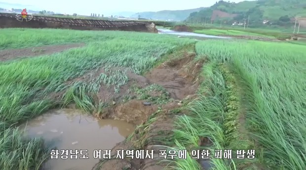 North Korea's state TV airs footage of rice paddies damaged by heavy downpours in South Hamgyong Province in August. (Yonhap)