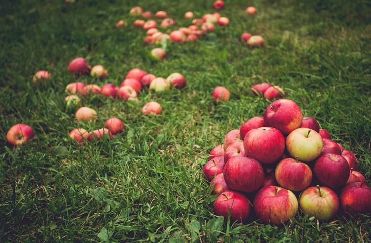 사과, 껍질째 먹어야 하는 6가지 이유