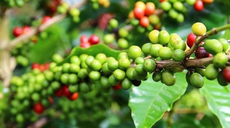 세계에서 가장 비싼 커피, 두바이에 등장