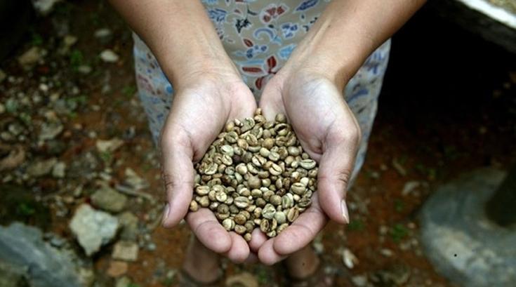 항산화효과 가장 강력한 커피는?