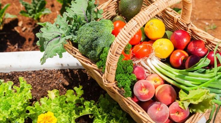 美 농부들이 나서서 새로운 '유기농 라벨' 만든 이유는?