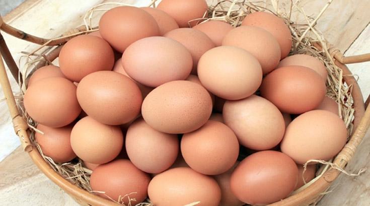 방목으로 키운 닭의 달걀이 비타민D 더 풍부…