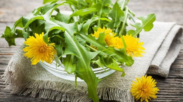 혼자만 '먹기엔' 아까운 꽃들