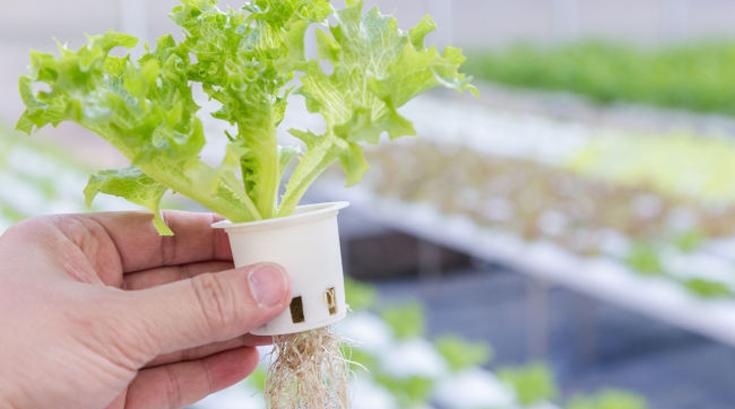수경재배 채소류 중금속 '안전'…토양재배와 차이 없어