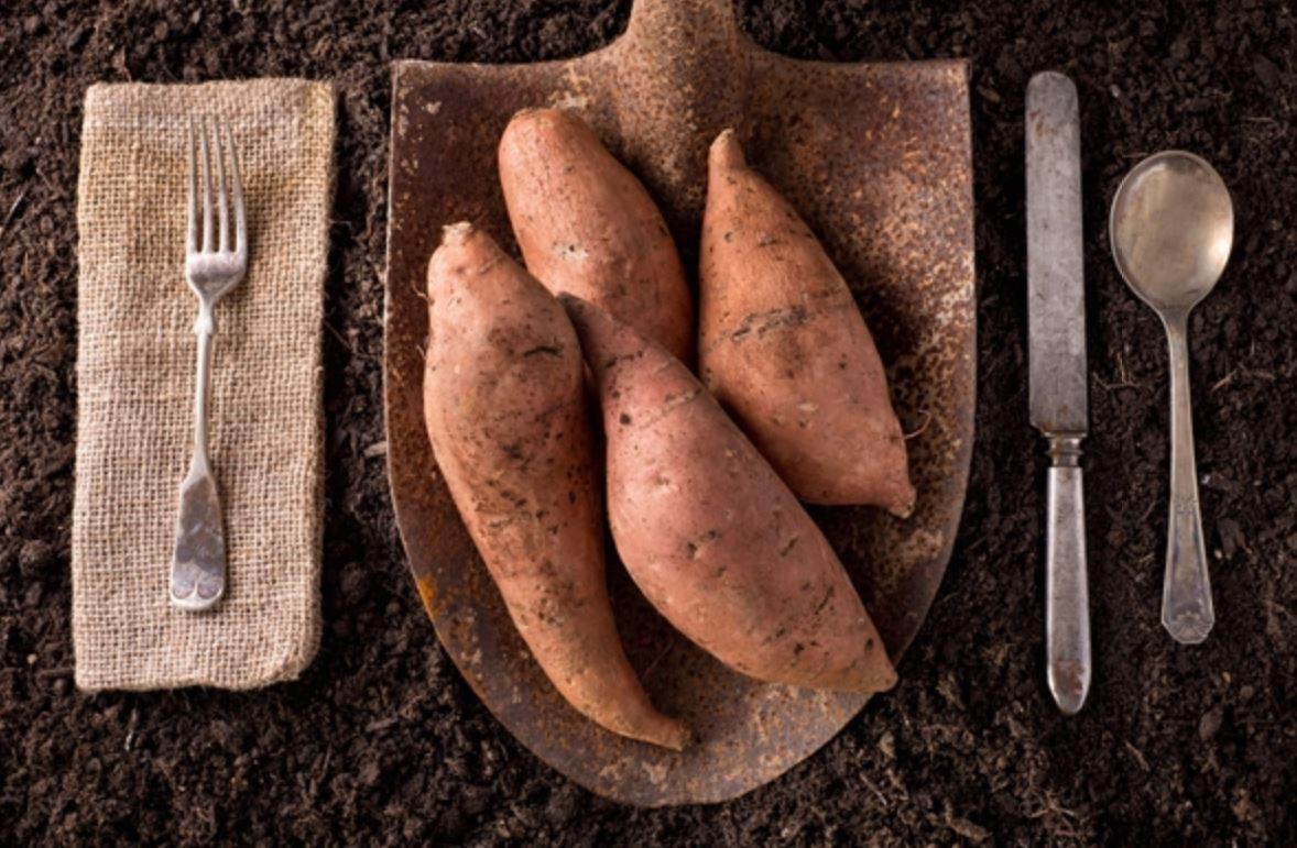 '뿌리채소' 고구마 vs 감자, 같지만 다르다