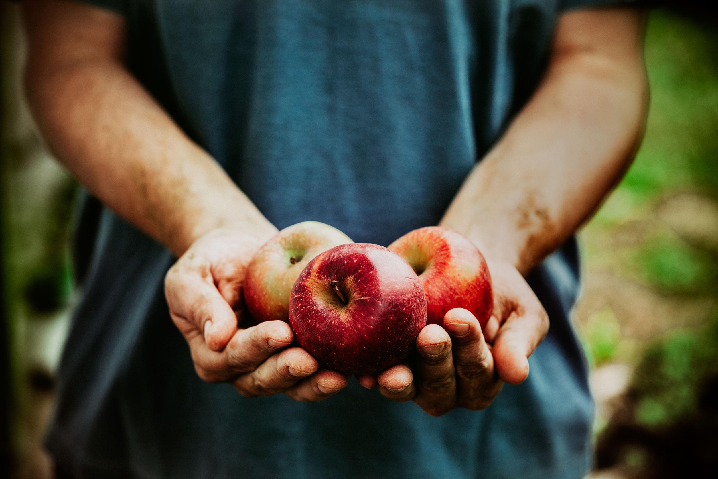 지구를 위한 지속가능한 식품들