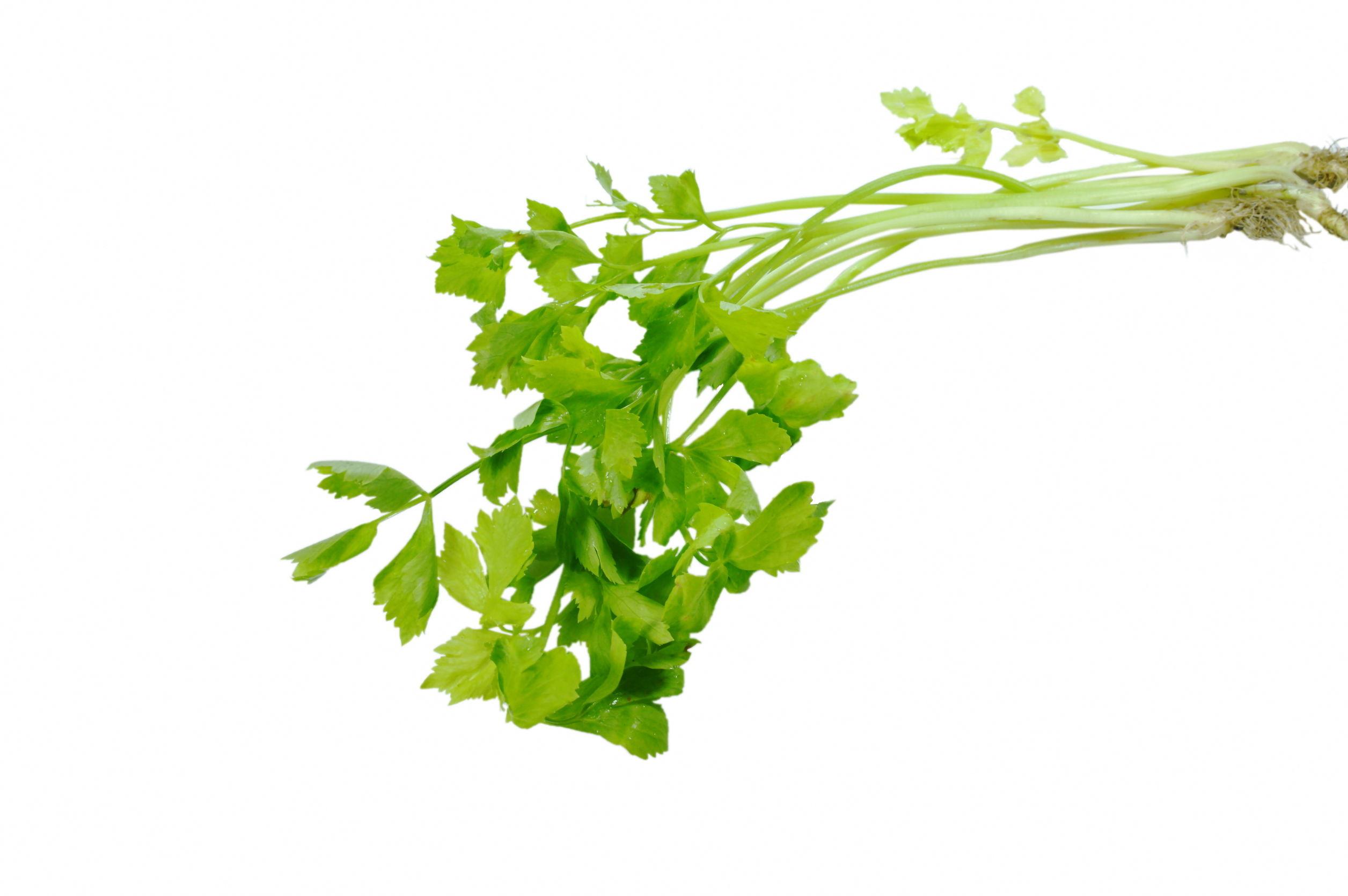 [나눔과 배려 캠페인]천연 면역 식재료 '산나물'