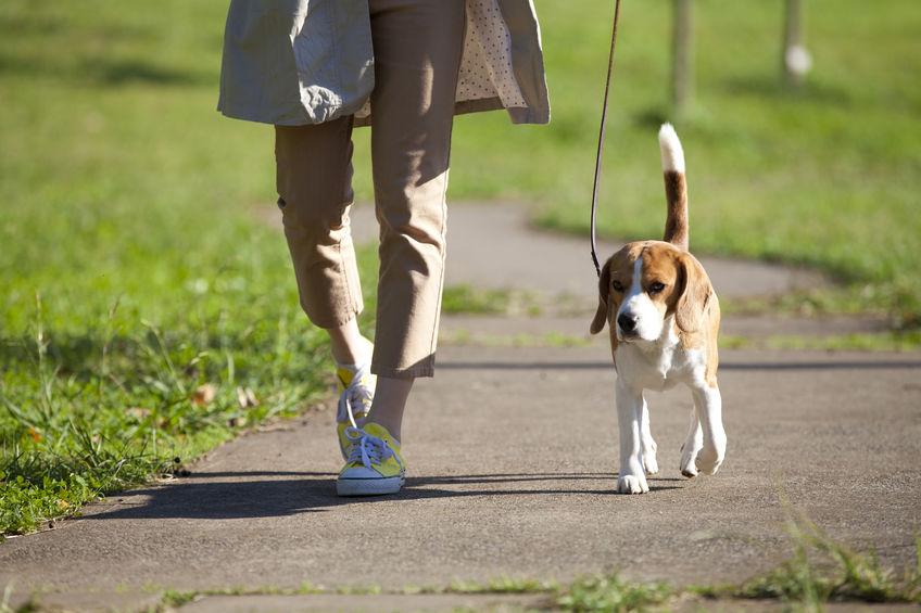 식사후 걷기, 이래서 좋다