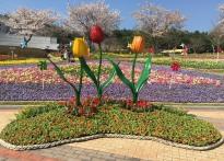 울산대공원, 8일~9일 봄맞이 튤립...