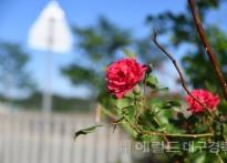 [포토뉴스] 쓸쓸하고 찬란한 '5월...