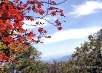 가을 옷 갈아입은 소백산 연화봉...