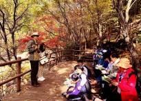 소백산 죽계구곡에서 즐기는 만추...