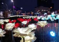 포항 영일대 겨울 밤바다 LED장미...