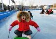 [포토뉴스]추위가 즐거운 얼음썰..