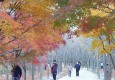 [가을 명상]'가을을 보내며'