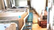 울릉도에 민간인 사비로 해삼 30만 마리 무상 방류