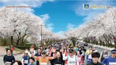 '제25회 경주벚꽃마라톤대회' 4월9일 힘찬 레이스