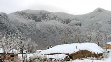 [포토뉴스] 눈으로 뒤덮인 울릉도 나리 투막집