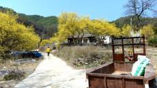 산촌 봉화마을 노란 산수유 밭에서 아홉 번째 시낭송회