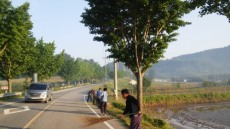 전남 무안군 성암마을, 가꾸기 사업 실시