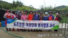 웅촌농협 여성단체, 농촌일손돕기 봉사활동 실시