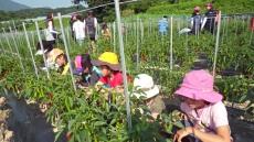 울산 온양농협, 식사랑 농사랑 어린이 식문화체험단 농촌 체험활동