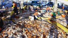 씨 말라가는 金오징어 가격 잡는다. 해수부, 오징어 가격안정 대책 발표