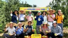 가뭄 · 우박피해 이겨낸   영주 새 여름사과 '썸머킹'첫출하