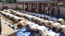 안동 도산서원 환안제  봉행