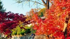 오늘 입동(立冬) 가는 가을 아쉬워 찰칵