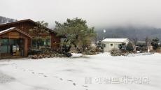 [포토뉴스]울릉도 나리분지 첫눈.단풍과 흰 눈이  이룬 절경