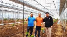 포항시, 아열대 작목 바나나 재배.... 농가소득 창출
