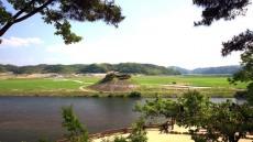 안동호 유휴지가 청보리밭으로....안동호섬마을 청보리밭 축제 개최