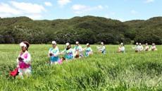 [포토뉴스] 보릿고개 생각나는 안동호 섬마을 청보리밭 축제