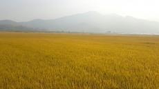 상주쌀 남아공 첫 수출길올라.... 아프리카 시장 개척