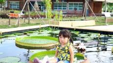 [포토뉴스]국립 백두대간 수목원에  빅토리아  연꽃활짝