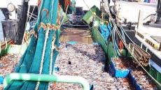 오징어불법 공조조업 뿌리 뽑나?....해수부 대책 어민반응 싸늘