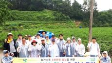 경북농협, 안동 서후면서 고추농가  농촌일손돕기  구슬땀