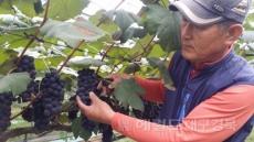 봉화군, 시골파견 사업 참여자 모집…최대 3000만원 지원