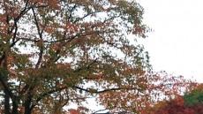 알록달록 가을옷 갈아입은 월영교 걸으며 아름다운 추억을....