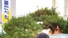 [헤럴드 포토]엄마와 함께 가을국화 향기속으로 ....