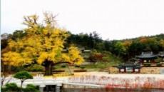 [주말명소-그 곳에 가면] 한 폭의 동양화 속 영천, 그리고 임고서원