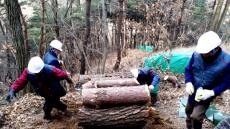 안동시, 산림청 주관 소나무재선충병 방제성과 우수기관 선정