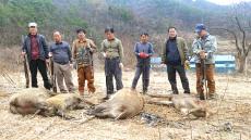 김천서 도심 출몰 멧돼지 4마리 포획