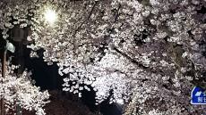 [헤럴드 포토]낙동강변 벚꽃축제 포토존과 시민들