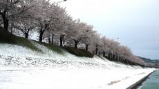[헤럴드 포토]봄을 시샘하는 눈